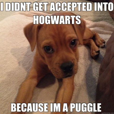 17 Dogs that Love Harry Potter More Than You   Her Campus