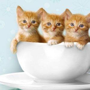 Gambar Kucing Lucu Funny Cat Pictures Cats Cat Pics