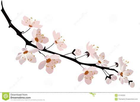Cherry Blossom Stock Photos Image 31193333 Cherry Blossom Drawing Cherry Blossom Vector Pink And White Background