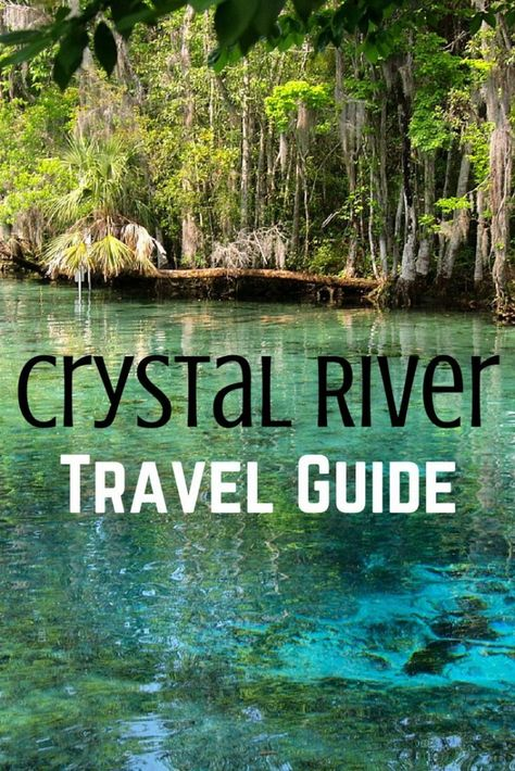 5 Things to Do in Crystal River, Florida