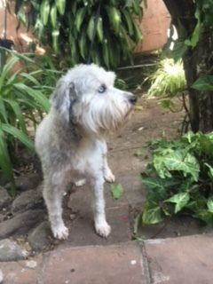 Adopt Fiona on | Cuteness!!!☘️ | Pets, Old english