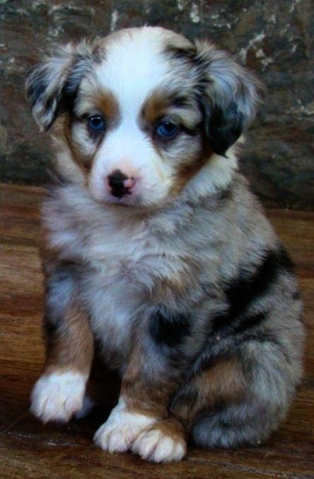 Outstanding Puppies For Adoption In Mooresville Nc Pinterest Best Dog Breeds Puppies Dog Breeds