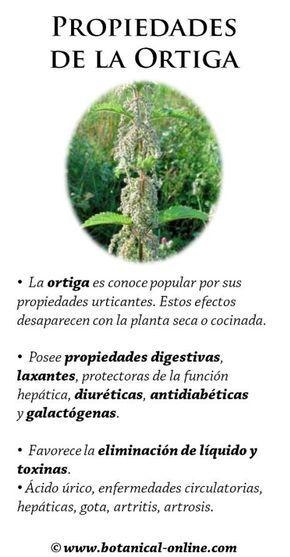 ortiga para acido urico