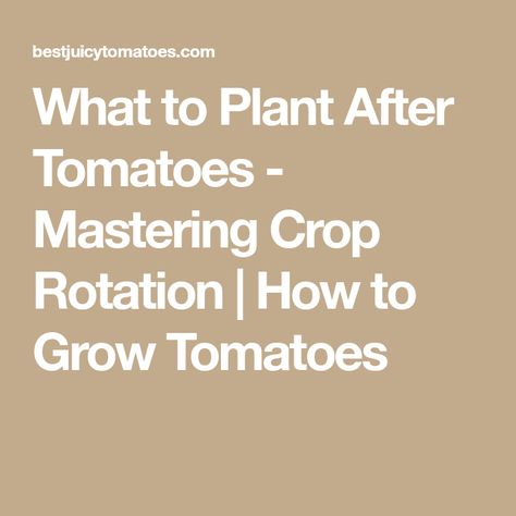 Crop Rotation What To Plant After Tomatoes Growing Organic Tomatoes Growing Tomatoes Crop Rotation