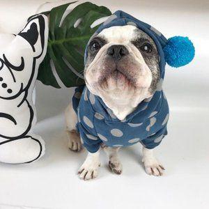 French Bulldog おしゃれまとめの人気アイデア Pinterest Yosi To 中型犬 可愛い犬 ペット