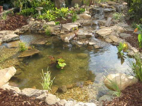 How Much Do Backyard Koi Ponds Cost In Orlando Central Florida Water Gardens Pond Natural Pond Pond Water Features