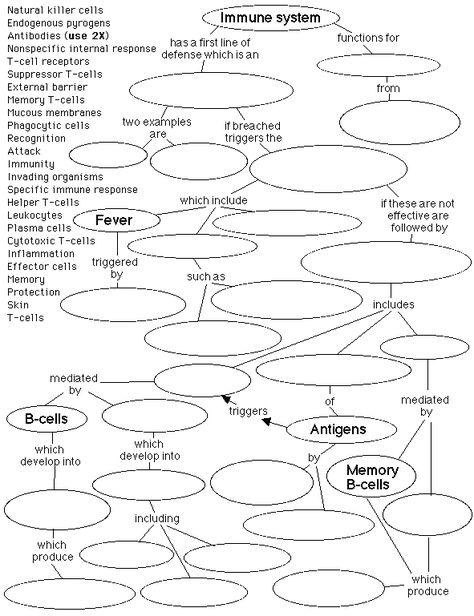 Steps Involved In Humoral Immune Response Or Antibody Mediated