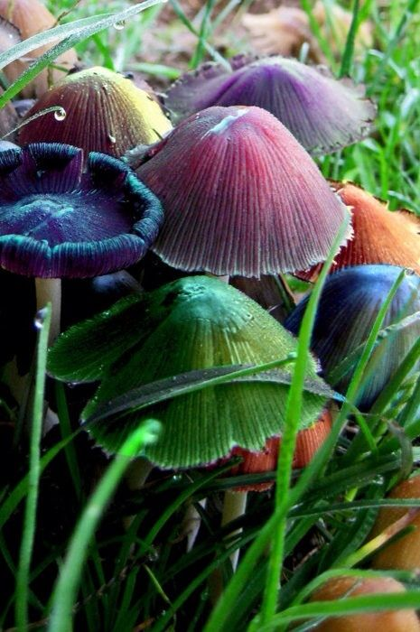 Осеннее вдохновение: грибы | Pflanzen, Pilze, Blumen pflanzen