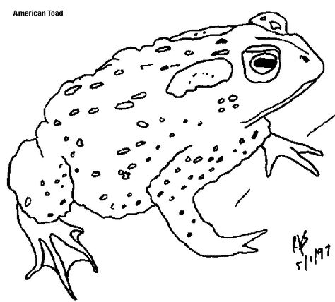 Minnesota government page with information about frogs and ...