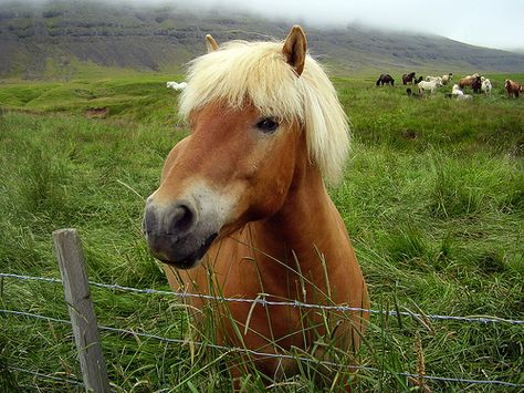 #horse #jokes What type of story does a runaway horse tell? A tale of whoa! - See more at: http://mirthinablog.com/2013/06/30/ive-fallen-and-i-cant-giddy-up-horse-jokes-2/#sthash.XrW4STwV.dpuf Send these to your #camper !