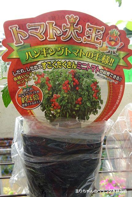 夏野菜2種の栽培開始です 画像あり 夏野菜 野菜 トマト栽培