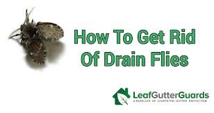 Drain Fly In Kitchen Sink Google Search In 2020 Drain Homemade Fruit Fly Trap Fly Infestation