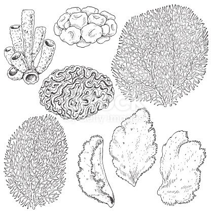 Hand Drawn Underwater Natural Elements Sketch Of Reef Corals Black And White Set Illustration Coloring Page Coral Art Coral Drawing Book Art Sculptures