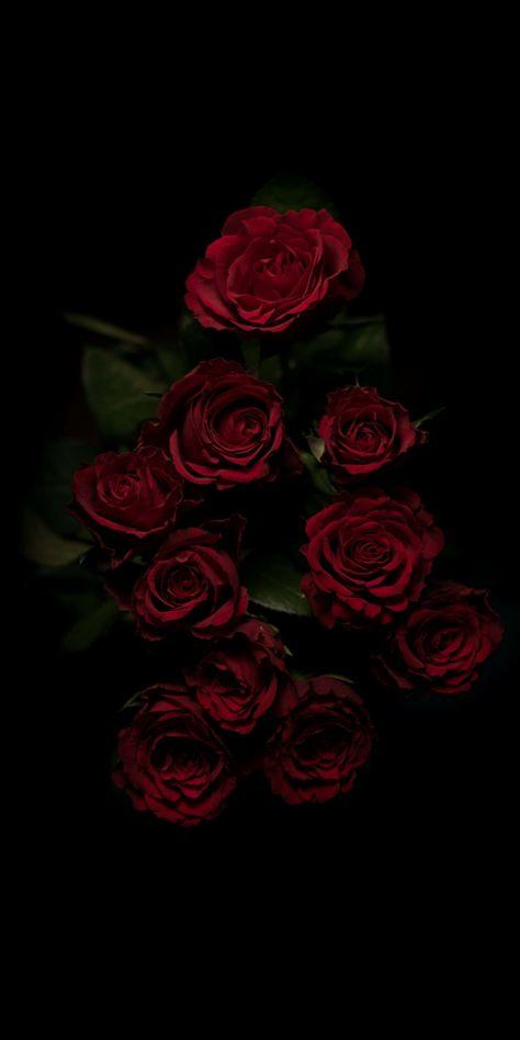 garden roses, red, rose, flower, floribunda, rose family, iphone wallpaper