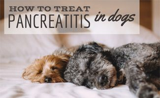 How To Treat Pancreatitis In Dogs Pancreatitis In Dogs Dog