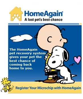 50 Off Home Again Promo Code Free Shipping July 2019 Homeagainpromocode Promocodes Promocodes2019 Codes Coupo Promo Codes Online Promo Codes Coding