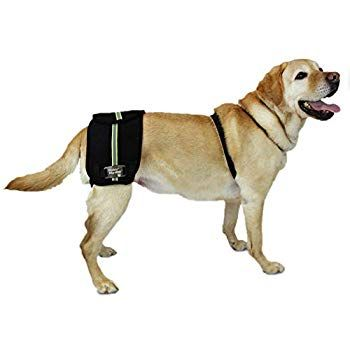 Walkin Hip Eez Dog Hip Brace Support Harness System Provides Joint Support For Dogs With Hip Dysplasia A In 2020 Dog Wheelchair Best Glucosamine For Dogs Dog Health
