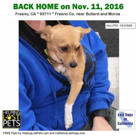 Backhome Hulk Chihuahua From Fresno Ca Has Been Reunited With His Family Lost Nov 10 2016 Back Home Nov 11 2016 Losing A Dog Dogs Chihuahua