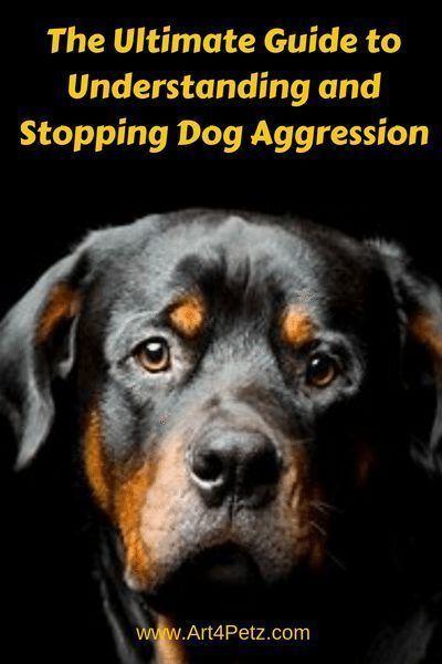 Understanding Stopping Dog Agression Aggressive Dog Big Dog