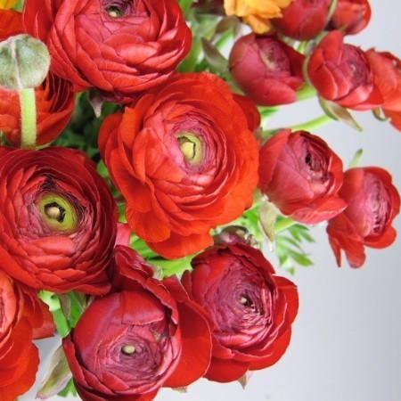 Ranunculus Bulbs Red Flower Bulbs Eden Brothers In 2020 Spring Plants Bulb Flowers Fall Plants