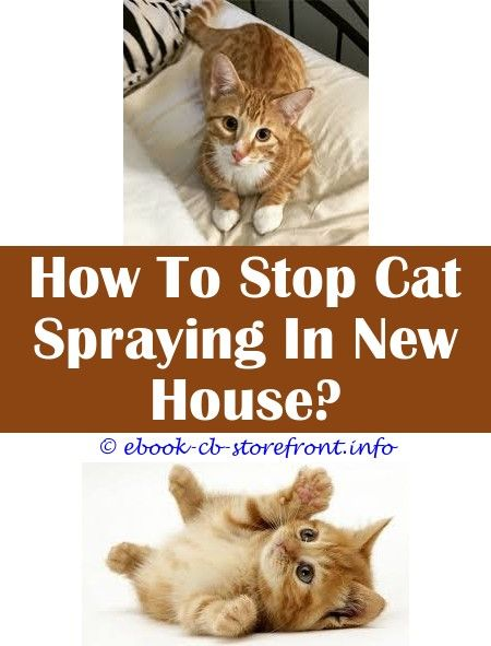 3 Hardy Ideas How Does A Neutered Cat Spray Sprays To Calm Cats How To Keep Cats From Spraying Porch Comfort Zone Feliway Spra Toxoplasmosis Admirable Aerosol