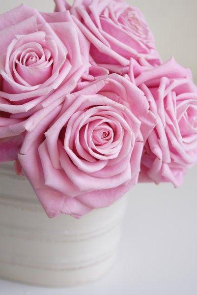 Pin De Lori P Em Flowers Cor De Rosa Rosas Rosa Dos Ventos