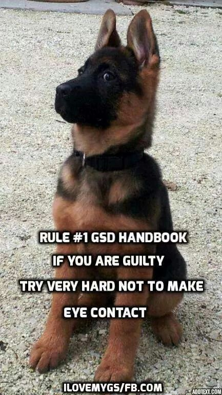 So True Lol Germanshepherd German Shepherd Dogs German Shepard Puppies German Shepherd Memes
