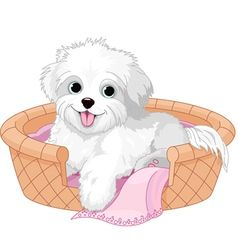 White Fluffy Dog Vector Image On Vectorstock Fluffy Dogs White