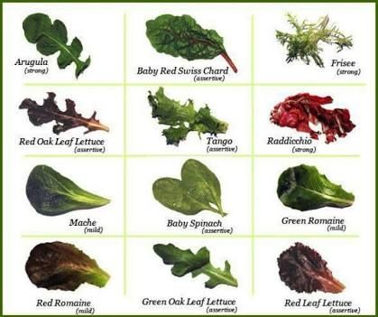 Image Result For Types Of Lettuce With Pictures And Names With