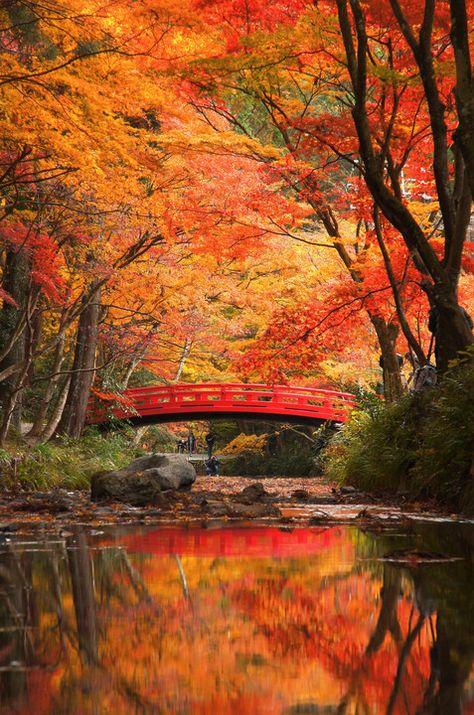 Beautiful Scenery of Autumn! Autumn Leaves via αcafe Henri De Toulouse Lautrec, Beautiful World, Beautiful Places, Beautiful Pictures, Beautiful Scenery, Beautiful Beautiful, Amazing Places, All Nature, Amazing Nature