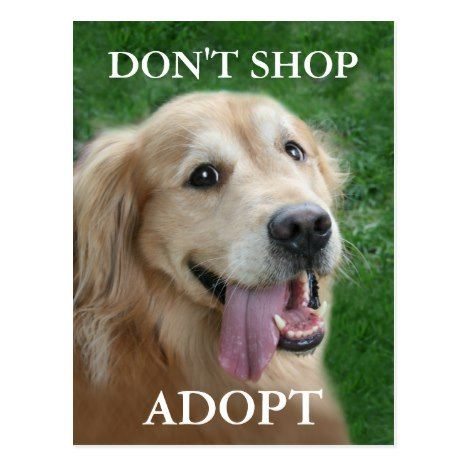 Golden Retriever Don T Shop Adopt Rescue Postcard Zazzle Com