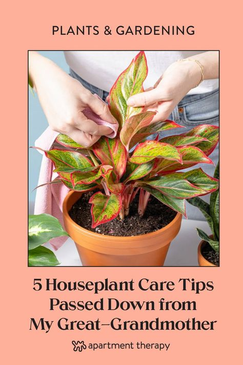 These sage houseplant tips have never steered me wrong in my own plant care, and I hope they'll bring a little of Lucille's magic to your houseplant collection, too.