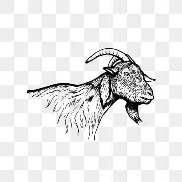 Goat Head Hand Drawn Vintage Sheep Black And White Goat Psd Png Transparent Clipart Image And Psd File For Free Download