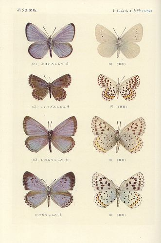 21 best vintage butterfly tattoo images in 2017 Illustration Botanique, Butterfly Illustration, Illustration Art, Nature Illustrations, Foot Tattoos, Flower Tattoos, Ribbon Tattoos, Key Tattoos, Butterfly Tattoos