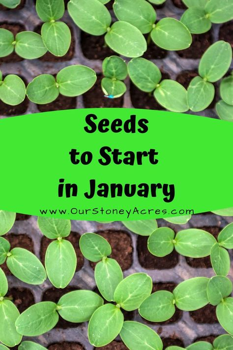 What seedlings can you start in January?- Zones 5 & 6 - Our Stoney Acres