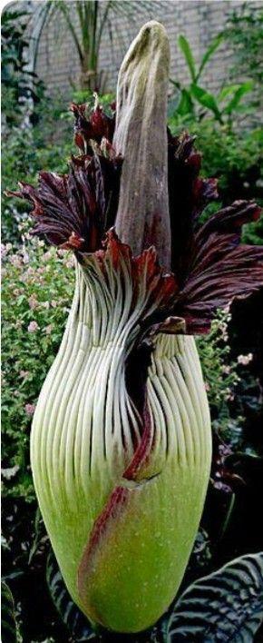 Pin By Taisiydahsievna On Komnatnye Cvety Unusual Flowers Strange Flowers Unusual Plants