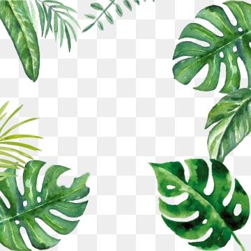 Creative Green Leaf Palm Border Design Material Png And Psd Palm Tree Photography Plant Wallpaper Graphic Design Background Templates