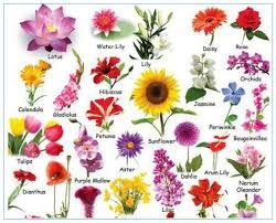 Flower Chart Google Search Flower Images With Name Flower Names Beautiful Flower Names
