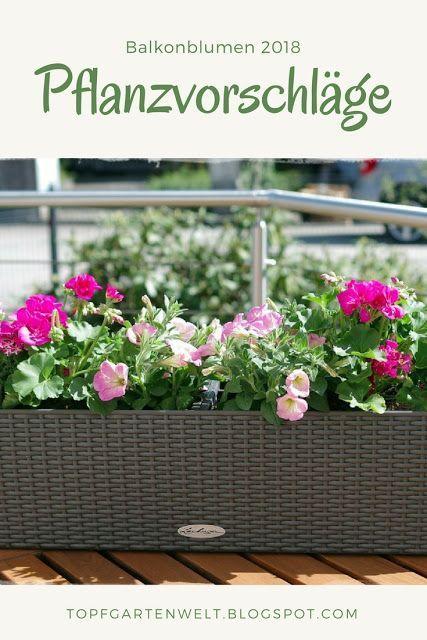 Balkonblumen 2018 Ein Traum In Rosa Pink Und Weiss Gartenblog