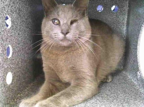 ORLANDO FLORIDA! HELP! BLIND   DIES SATURDAY 3/16/2013  If you can rescue or foster contact this rescue now!  Kindnessforcats@yahoo.com is the address for the rescue  Animal ID: A258887 Room No.: WC53  Hi, I'm Mr. grey. I'm approximately 1 year old gray male. I am friendly and I have been at Orange County Animal Services since Saturday, March 09, 2013. My due out date is Saturday, March 16, 2013.  Orange County Animal Services  at 2769 Conroy Rd., Orlando, FL. The phone number is (407)254-9140