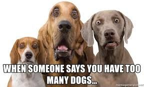 Too Many Dogs Meme Google Search Funny Pictures Funny Animals Party Jokes