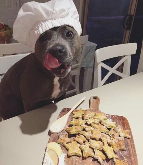 Looks like this Chef Pitbull whipped up some yummy treats, and he's looking hungry! Cute Little Animals, Cute Funny Animals, Funny Dogs, Amstaff Terrier, Pitbull Terrier, Bull Terriers, Terrier Mix, Cute Dogs And Puppies, I Love Dogs