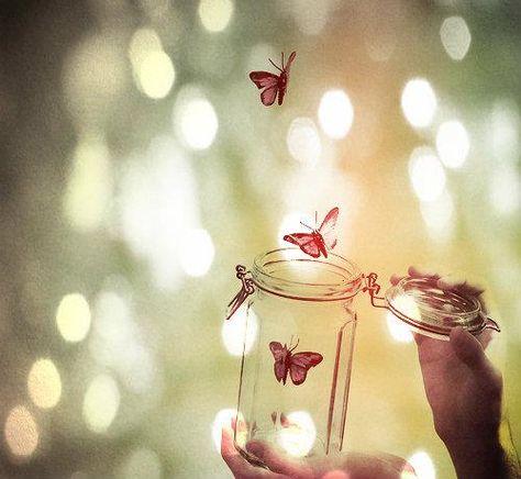 Liberté aux papillons  :-)