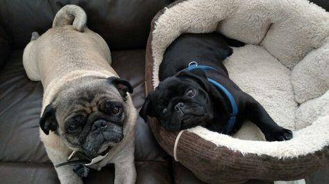 My lazy bums... <3