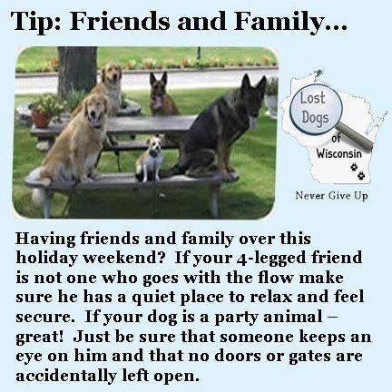 Help Losing A Dog Pet Safe Losing A Pet