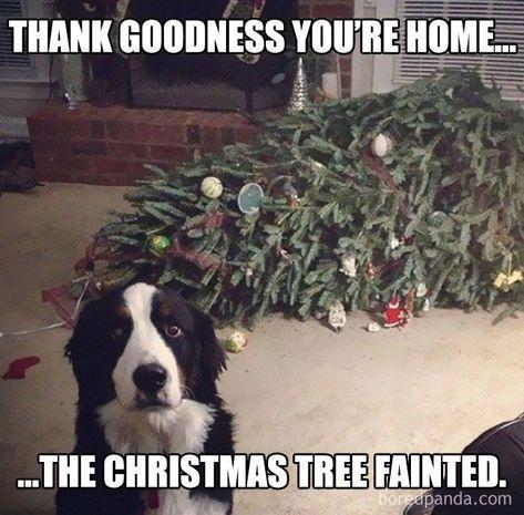#Hunde #Lustig   - quotesfunny - #hilariousdogs #hunde #Lustig #QuotesFunny
