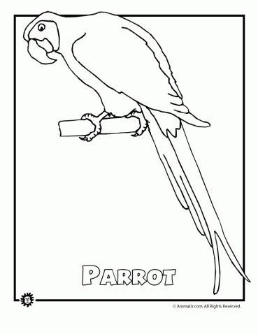Endangered Animals Coloring Pages Animals From North America The