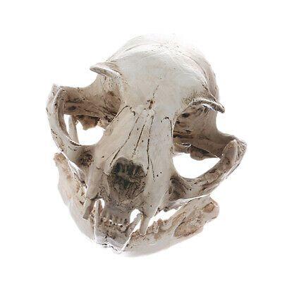 Realistic Skull Resin Replica Teaching Skeleton Model Aquarium Decoration