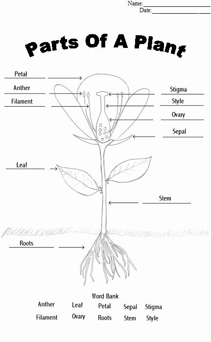 Parts Of A Flower Coloring Page Fresh Plant Diagram Coloring Sheet Parts Of A Flower Plants Worksheets Plant Lessons