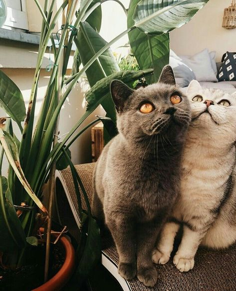 Pin By 4 Yah Com On Jazzy And Buddy Kittens Cutest Pretty Cats Cute Cats